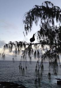 kauai hen 2