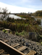 ellicott slough national wildlife refuge, santa cruz rail line